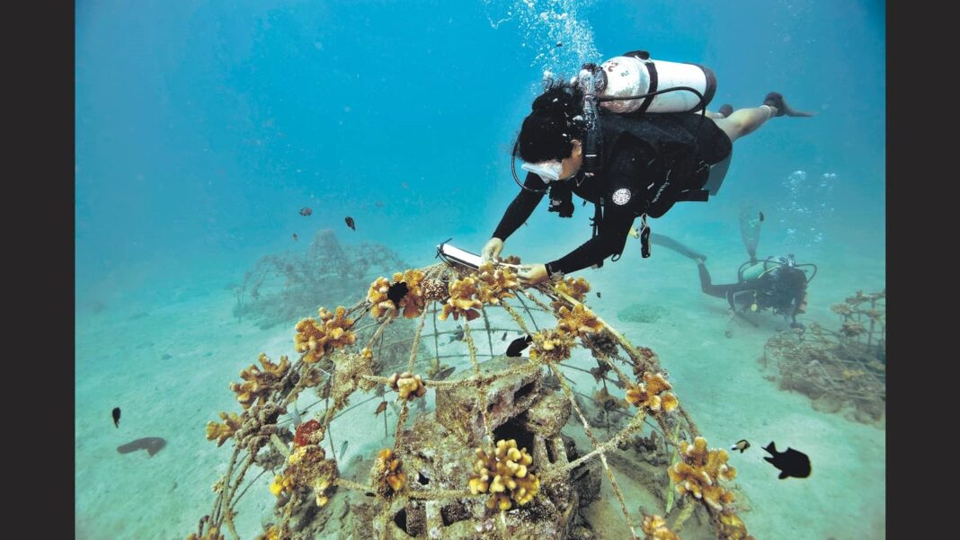 Turning over a new reef: Inside three coral regeneration projects