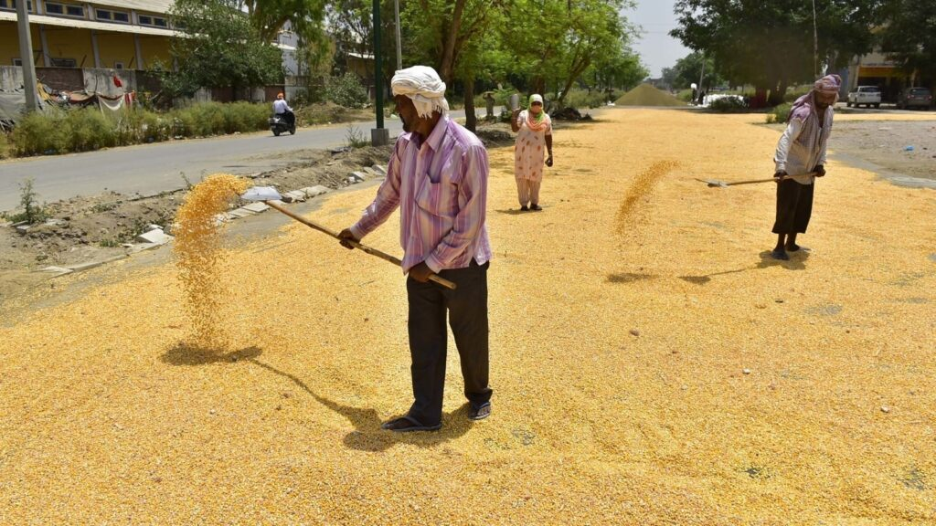 Govt to give away more food as granaries bulge