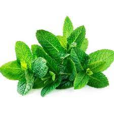 Five health benefits of mint leaves; It's Miracle For Our Health